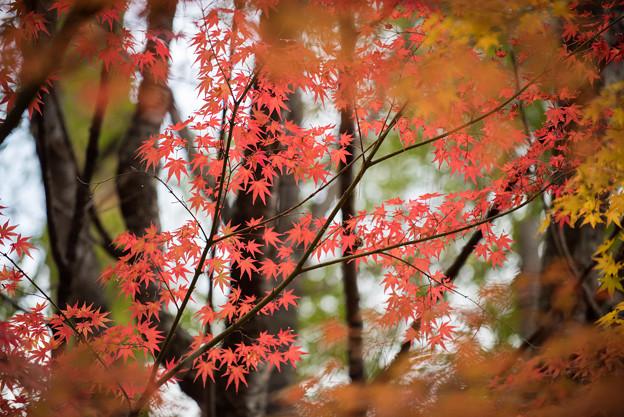 河口湖【久保田一竹美術館の紅葉】3