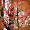 Photos: 河口湖【久保田一竹美術館の紅葉】3