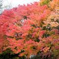 河口湖【紅葉】1