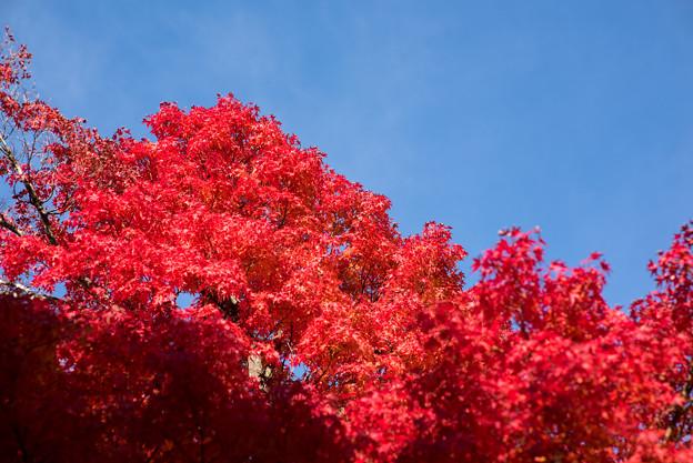 河口湖【紅葉】2