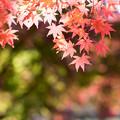 Photos: 河口湖【紅葉】7