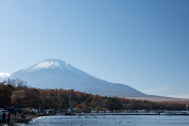 山中湖【富士山と紅葉】1
