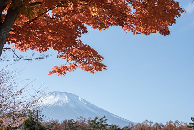 山中湖【富士山と紅葉】3