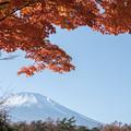 Photos: 山中湖【富士山と紅葉】3
