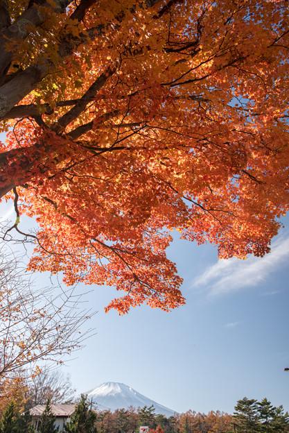 山中湖【富士山と紅葉】4