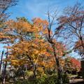 山中湖【紅葉】2