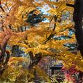 山中湖【紅葉】4
