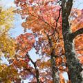 山中湖【紅葉】5