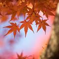 山中湖【紅葉】9