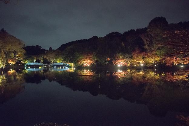 薬師池公園【紅葉のライトアップ】1