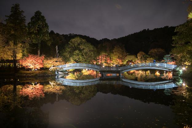 薬師池公園【紅葉のライトアップ】2