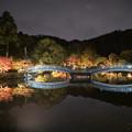 Photos: 薬師池公園【紅葉のライトアップ】2