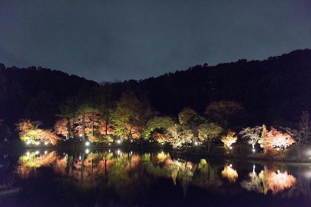 薬師池公園【紅葉のライトアップ】3