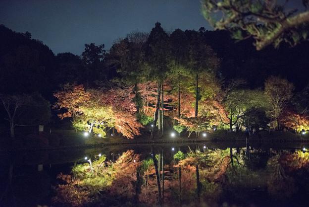 薬師池公園【紅葉のライトアップ】4