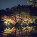 Photos: 薬師池公園【紅葉のライトアップ】4