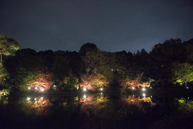 薬師池公園【紅葉のライトアップ】5