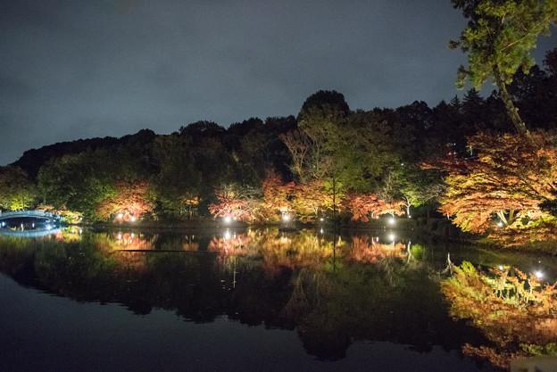 薬師池公園【紅葉のライトアップ】6