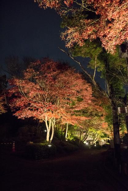 薬師池公園【紅葉のライトアップ】7