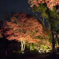 Photos: 薬師池公園【紅葉のライトアップ】7