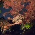薬師池公園【紅葉のライトアップ】8