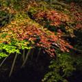 薬師池公園【紅葉のライトアップ】9
