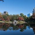 小石川後楽園【大泉水の眺め】2