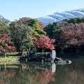 Photos: 小石川後楽園【大泉水付近の紅葉】1