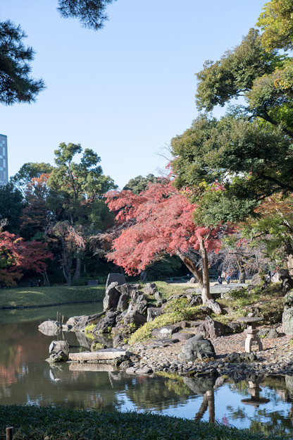 小石川後楽園【大泉水付近の紅葉】2