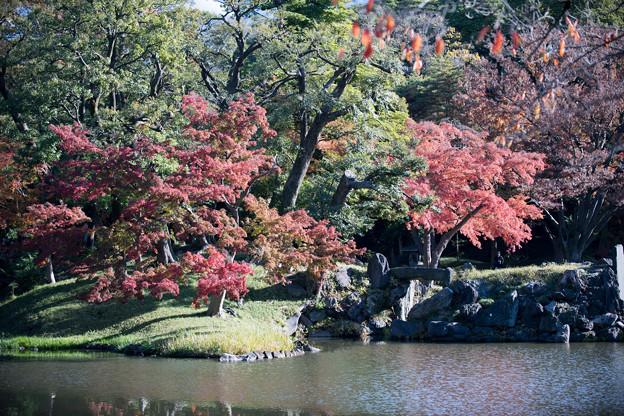 小石川後楽園【大泉水付近の紅葉】3