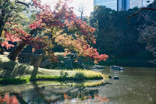 小石川後楽園【大泉水付近の紅葉】4