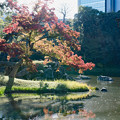 Photos: 小石川後楽園【大泉水付近の紅葉】4