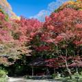 小石川後楽園【丸屋付近の紅葉】1