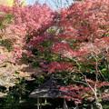 小石川後楽園【丸屋付近の紅葉】2