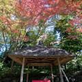 小石川後楽園【丸屋付近の紅葉】3