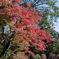 Photos: 小石川後楽園【丸屋付近の紅葉】4
