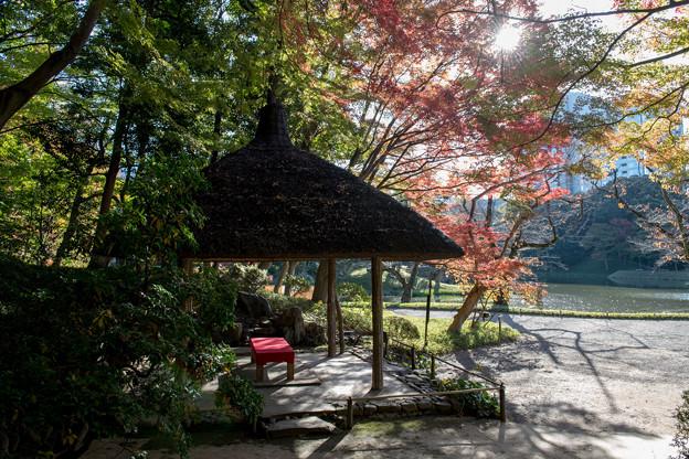 小石川後楽園【丸屋付近の紅葉】5