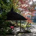 Photos: 小石川後楽園【丸屋付近の紅葉】5