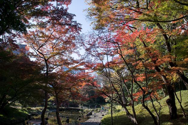 小石川後楽園【通天橋付近の紅葉】3