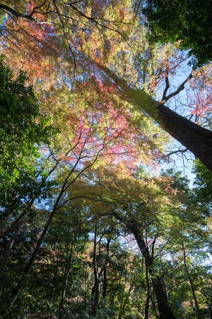 小石川後楽園【小廬山の紅葉】2