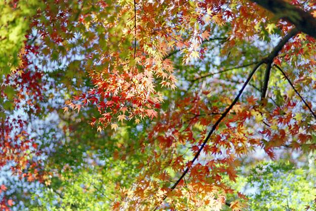 小石川後楽園【小廬山の紅葉】3銀塩