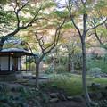 旧古河庭園【茶室と紅葉】1