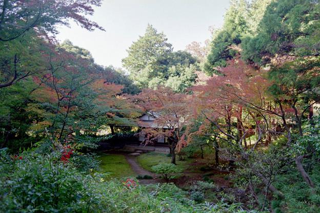 Photos: 旧古河庭園【茶室と紅葉】2銀塩