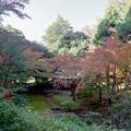 旧古河庭園【茶室と紅葉】2銀塩