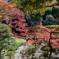 旧古河庭園【展望台からの紅葉の眺め】1