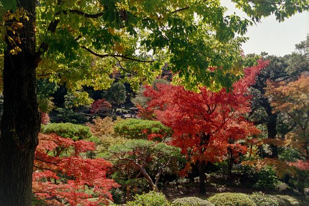 旧古河庭園【展望台からの紅葉の眺め】2銀塩