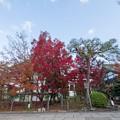 永観堂【聖峯閣の紅葉】