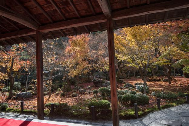 圓光寺【額縁庭園「十牛之庭」の紅葉】1
