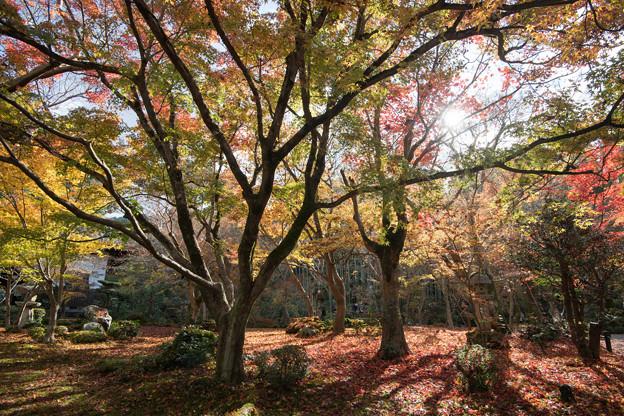 圓光寺【額縁庭園「十牛之庭」の紅葉】3