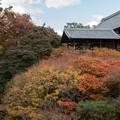 東福寺【開山堂付近の紅葉】2