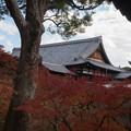 東福寺【開山堂付近の紅葉】3